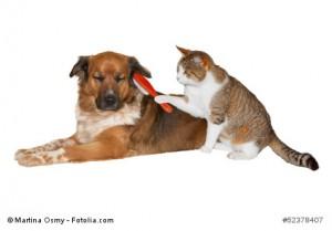 Katze mit Hund, Fellpflege :)