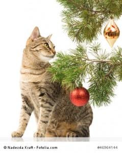 Katzen und Weihnachten, Tannenbaum und Tannennadeln